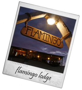 Visit Flamingo Lodge in South Angola